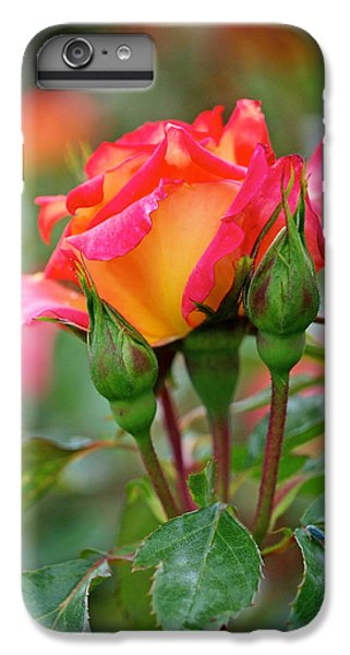 Eye Candy IPhone 6s Plus Case by Rona Black