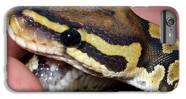 Ghost Royal Python Or Ball Python IPhone 6s Plus Case by Nigel Downer