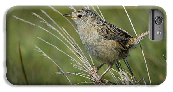 Grass Wren IPhone 6s Plus Case by John Shaw