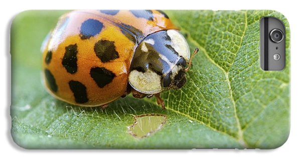 Harlequin Ladybird IPhone 6s Plus Case by Heath Mcdonald