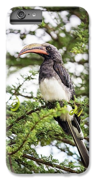 Hemprichs's Hornbill (tockus Hemprichii) IPhone 6s Plus Case by Peter J. Raymond