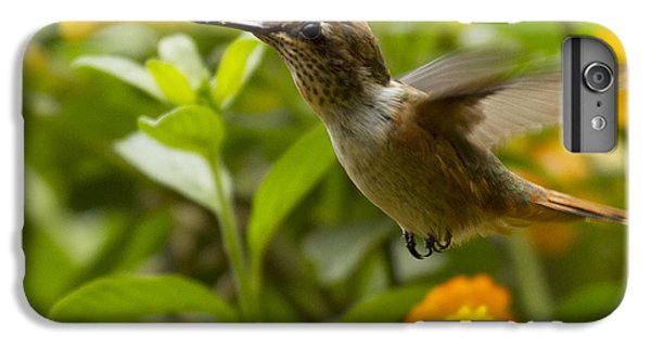Hummingbird Looking For Food IPhone 6s Plus Case by Heiko Koehrer-Wagner
