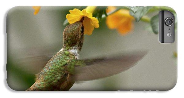 Hummingbird Sips Nectar IPhone 6s Plus Case by Heiko Koehrer-Wagner