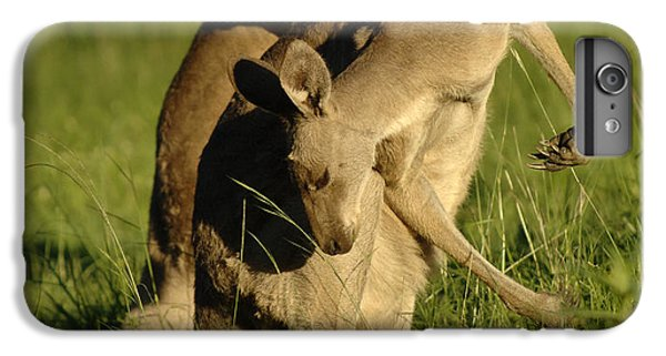 Kangaroos Taking A Bow IPhone 6s Plus Case by Bob Christopher