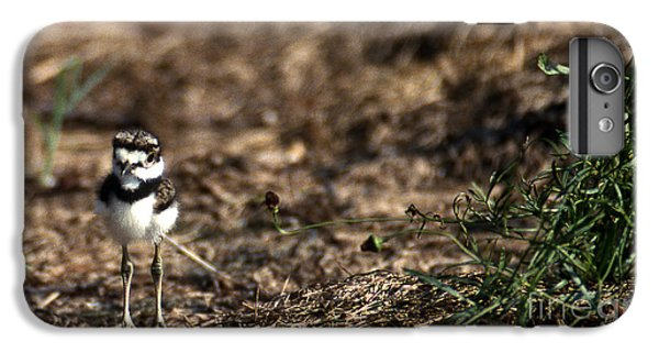 Killdeer Chick IPhone 6s Plus Case by Skip Willits