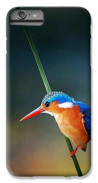 Malachite Kingfisher IPhone 6s Plus Case by Johan Swanepoel