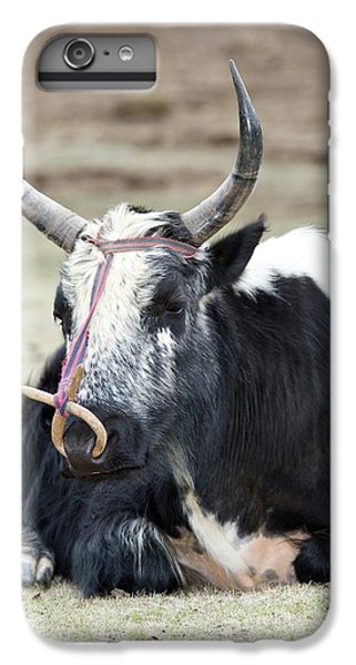 Male Yak In Potatso National Park IPhone 6s Plus Case by Tony Camacho