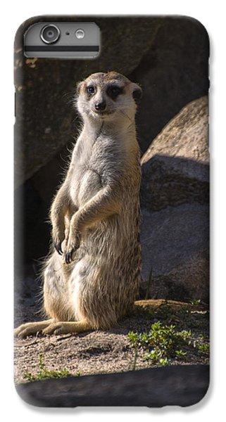Meerkat Looking Forward IPhone 6s Plus Case by Chris Flees