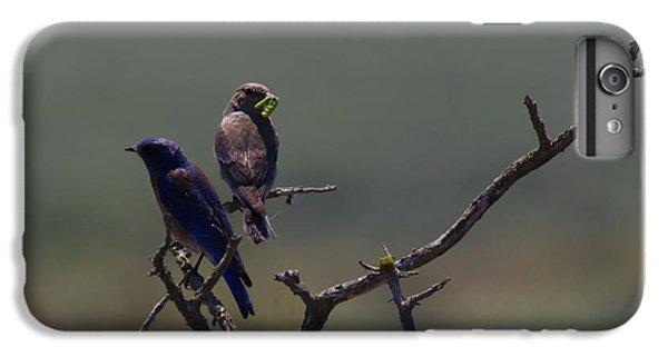 Mountain Bluebird Pair IPhone 6s Plus Case by Mike  Dawson