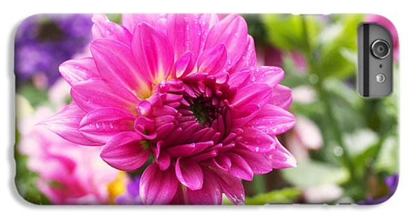 Pink Dahlia IPhone 6s Plus Case by Rona Black