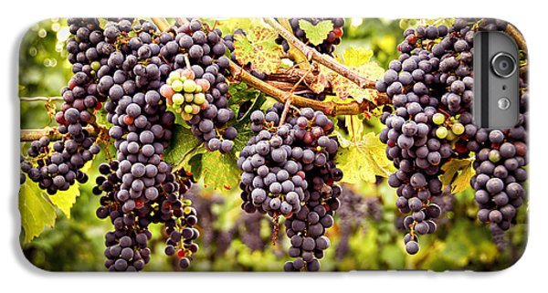 Red Grapes In Vineyard IPhone 6s Plus Case by Elena Elisseeva