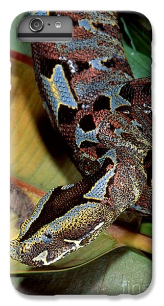 Rhino Viper IPhone 6s Plus Case by Gregory G. Dimijian, M.D.