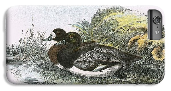 Scaup Duck IPhone 6s Plus Case by English School