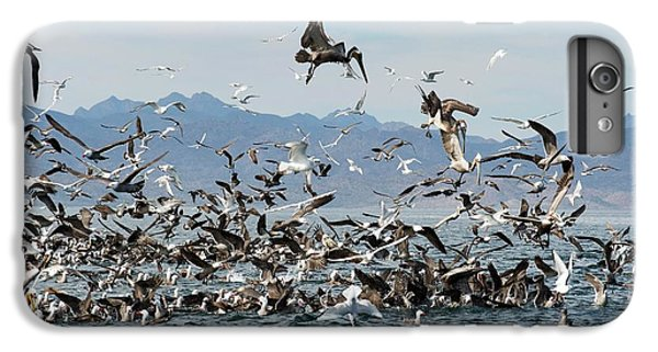 Seabirds Feeding IPhone 6s Plus Case by Christopher Swann