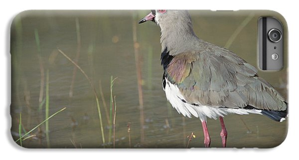 Southern Lapwing In Marshland Pantanal IPhone 6s Plus Case by Tui De Roy