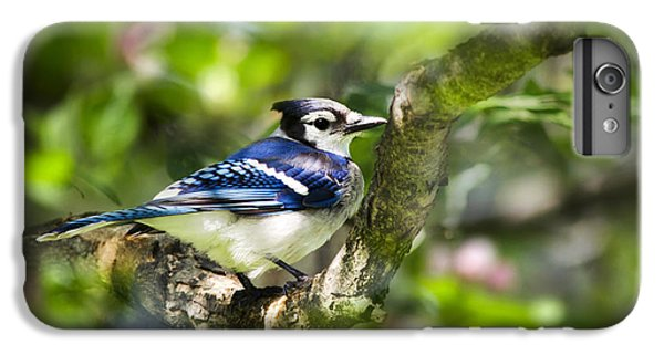 Spring Blue Jay IPhone 6s Plus Case by Christina Rollo