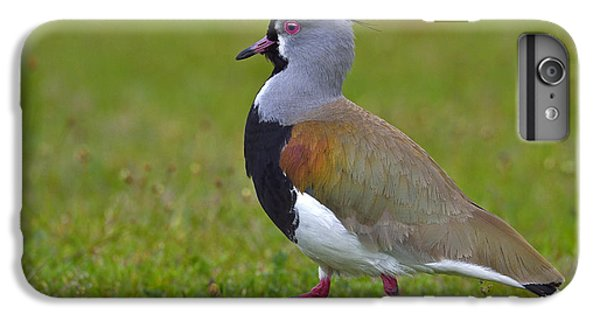 Strutting Lapwing IPhone 6s Plus Case by Tony Beck