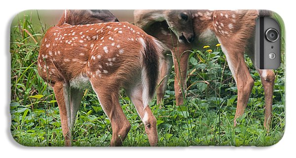 Summer Fawns IPhone 6s Plus Case by Lara Ellis