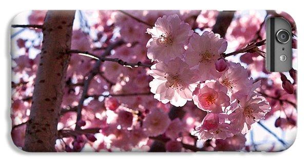 Sunlit Cherry Blossoms IPhone 6s Plus Case by Rona Black