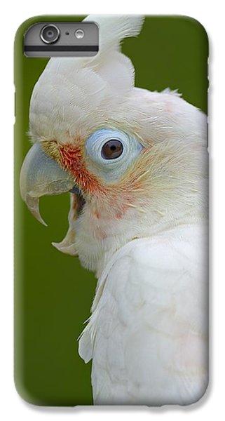 Tanimbar Correla IPhone 6s Plus Case by Tony Beck
