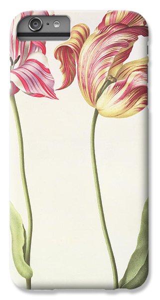 Tulips IPhone 6s Plus Case by Nicolas Robert
