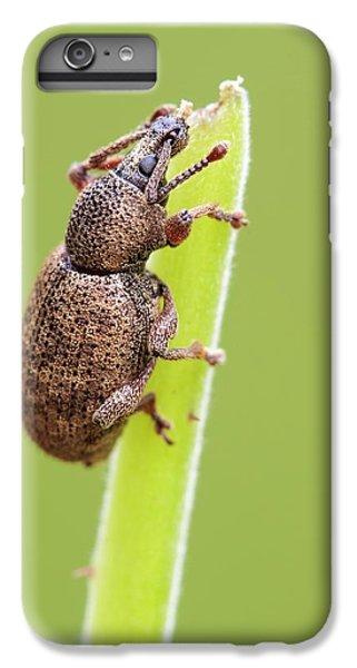 Weevil IPhone 6s Plus Case by Heath Mcdonald