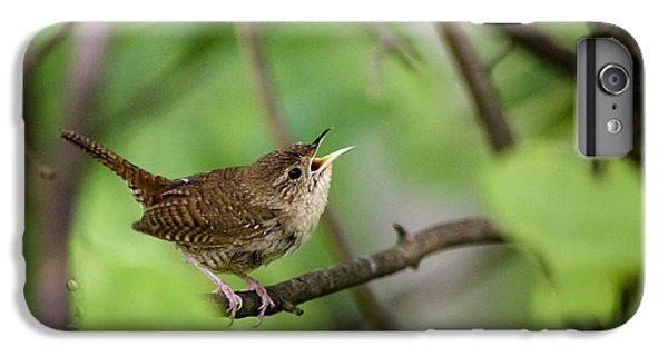 Wild Birds - House Wren IPhone 6s Plus Case by Christina Rollo