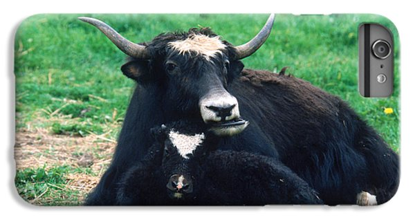 Yak IPhone 6s Plus Case by Mark Newman