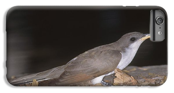 Yellow-billed Cuckoo IPhone 6s Plus Case by Gregory G. Dimijian, M.D.