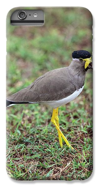 Yellow-wattled Lapwing IPhone 6s Plus Case by Peter J. Raymond