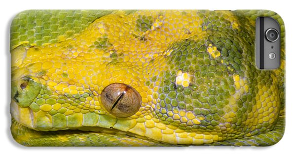 Green Tree Python IPhone 6s Plus Case by Dante Fenolio