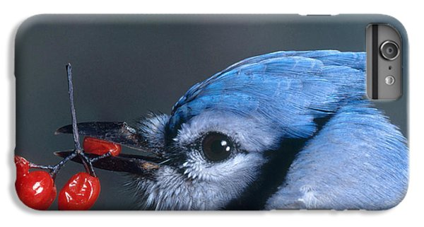 Blue Jay IPhone 6s Plus Case by Photo Researchers, Inc.