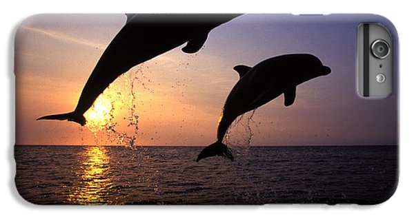 Bottlenose Dolphins IPhone 6s Plus Case by Francois Gohier and Photo Researchers