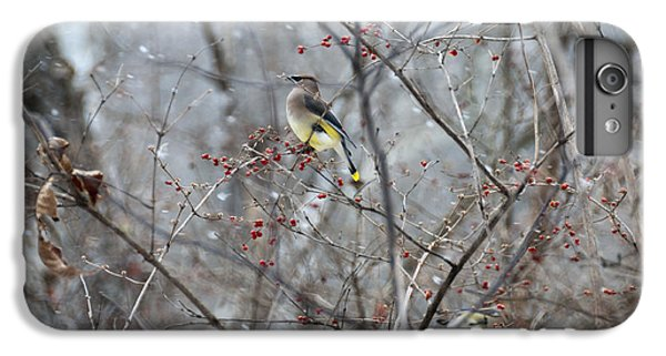 Cedar Wax Wing 3 IPhone 6s Plus Case by David Arment