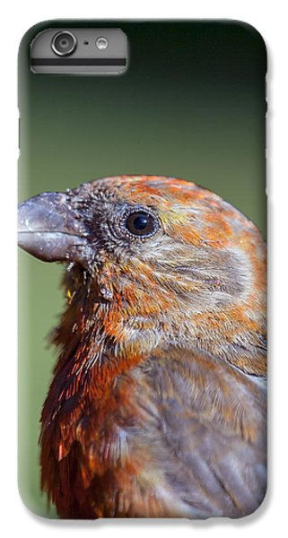 Red Crossbill IPhone 6s Plus Case by Derek Holzapfel