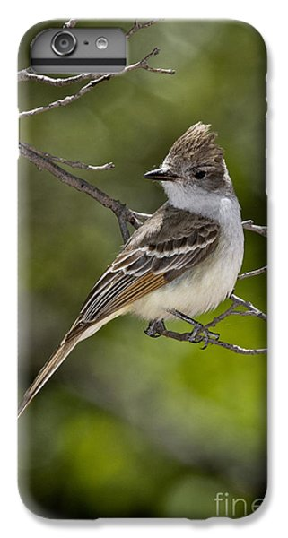 Ash-throated Flycatcher IPhone 6s Plus Case by Anthony Mercieca
