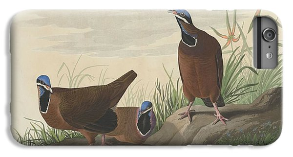 Blue-headed Pigeon IPhone 6s Plus Case by John James Audubon