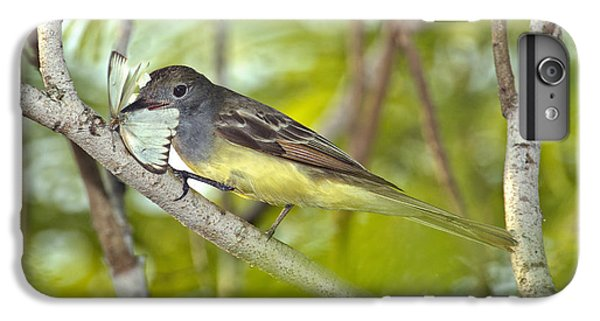 Great Crested Flycatcher IPhone 6s Plus Case by Anthony Mercieca