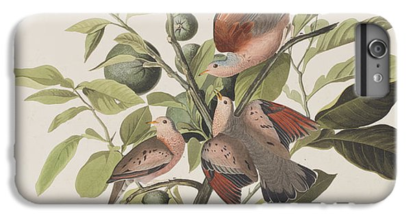 Ground Dove IPhone 6s Plus Case by John James Audubon