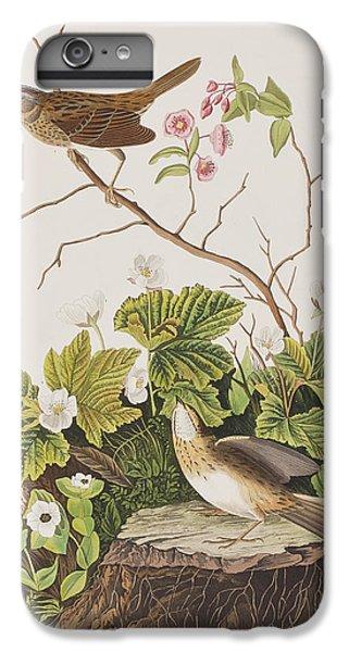 Lincoln Finch IPhone 6s Plus Case by John James Audubon