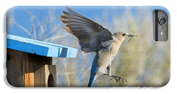 Nest Builder IPhone 6s Plus Case by Mike Dawson