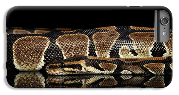 Ball Or Royal Python Snake On Isolated Black Background IPhone 6s Plus Case by Sergey Taran