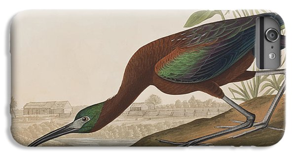 Glossy Ibis IPhone 6s Plus Case by John James Audubon