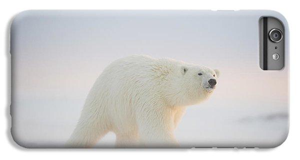 Polar Bear  Ursus Maritimus , Young IPhone 6s Plus Case by Steven Kazlowski