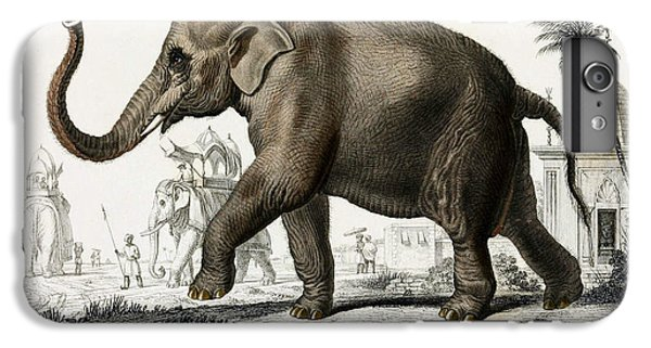 Indian Elephant, Endangered Species IPhone 6s Plus Case by Biodiversity Heritage Library