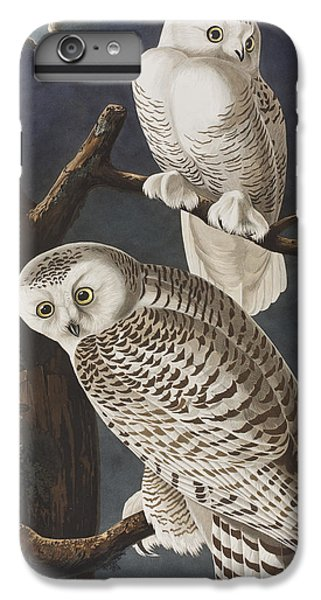Snowy Owl IPhone 6s Plus Case by John James Audubon