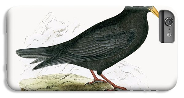 Alpine Chough IPhone 6s Plus Case by English School