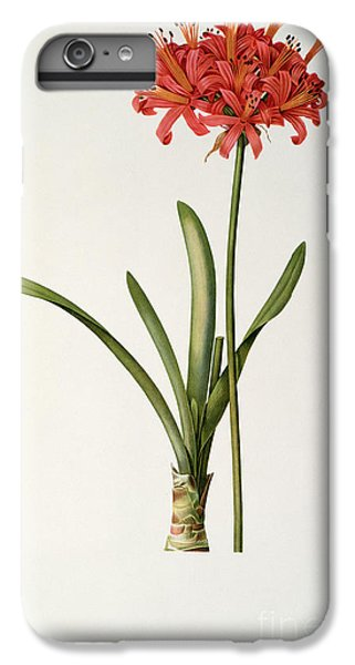 Amaryllis Curvifolia IPhone 6s Plus Case by Pierre Redoute