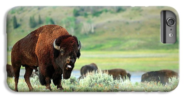 Angry Buffalo IPhone 6s Plus Case by Todd Klassy