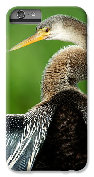 Anhinga Anhinga Anhinga, Pantanal IPhone 6s Plus Case by Panoramic Images